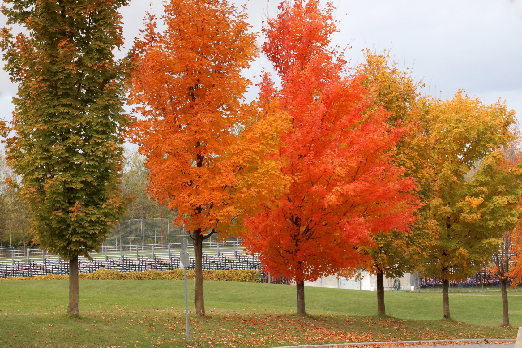 A picture of colorful trees with changing leaves in the fall. Proper training in digital photography can produce this type of vibrant picture.
