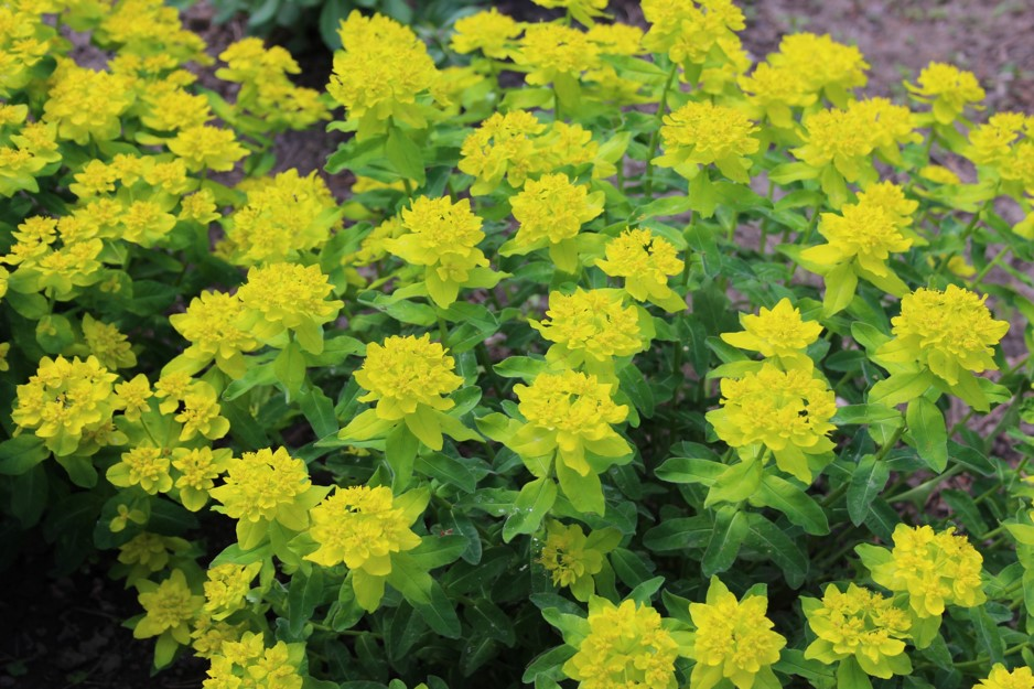 Picture of bright yellow flowers taken with a digital camera.
